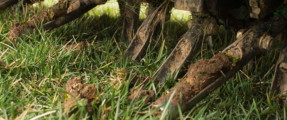 How Can Aeration & Overseeding Fix Your Lawn?