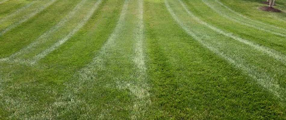 A healthy lawn benefits from routine maintenance services in Waterloo, IL.