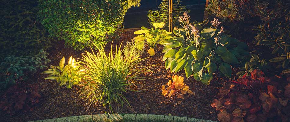 This landscape lighting system in Millstadt, IL spotlights the landscape plants.