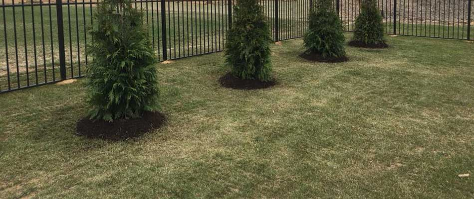 This lawn in Waterloo, IL has recently been treated with fertilizer and fungicide treatments.